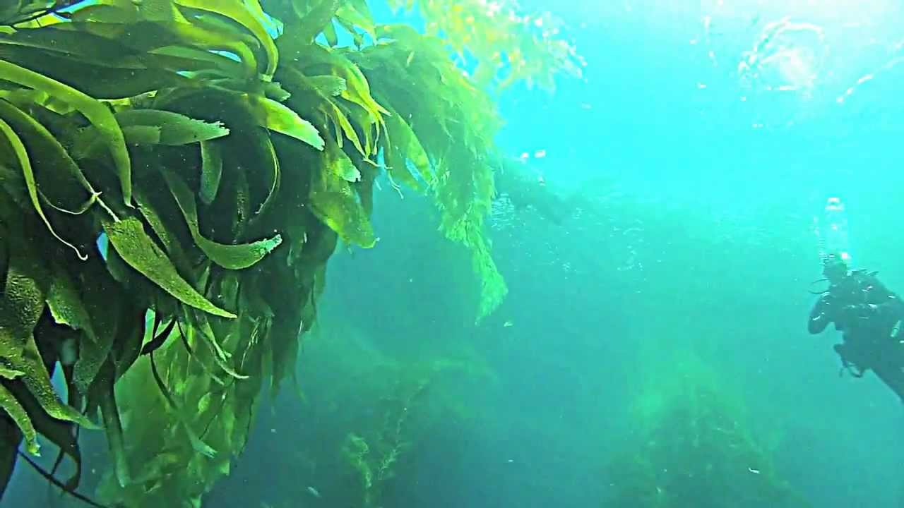 point loma kelp forest to be tested for radiation from