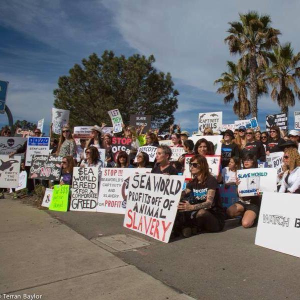Seaworld protest 1-19-14 02