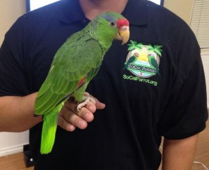 "Post image for OB Town Council Meeting: ""The Parrots of Southern California"""