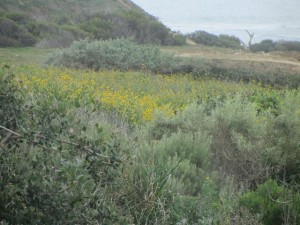 Post image for The Ocean Beach and Point Loma Peninsula Was Once an Island