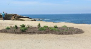 Post image for Hillside Improvement Project for Sunset Cliffs Park Delayed Again