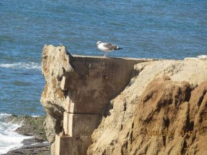 Post image for Vandalism, Erosion and Repairs at Sunset Cliffs Natural Park