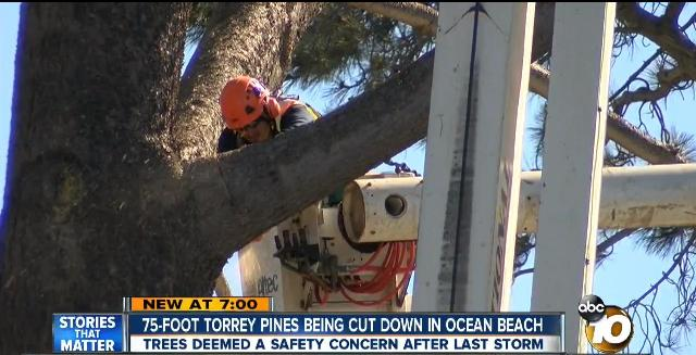 OB Torrey Pines Saratoga cut
