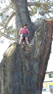 OB Torrey protest 80416 in tree good