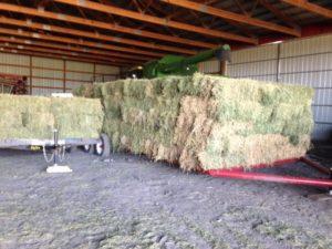 judi-curry-cowboy-hay
